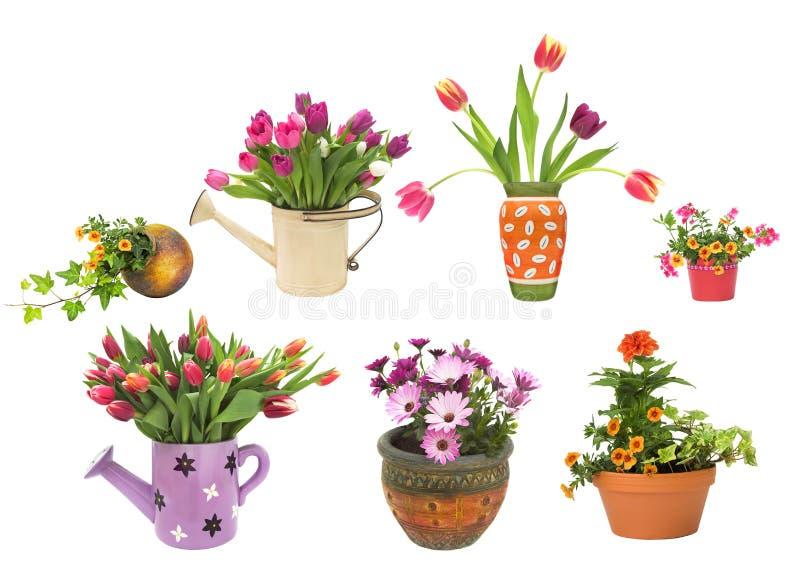 Vari contenitori dei POT di fiore isolati su bianco fotografia stock libera da diritti