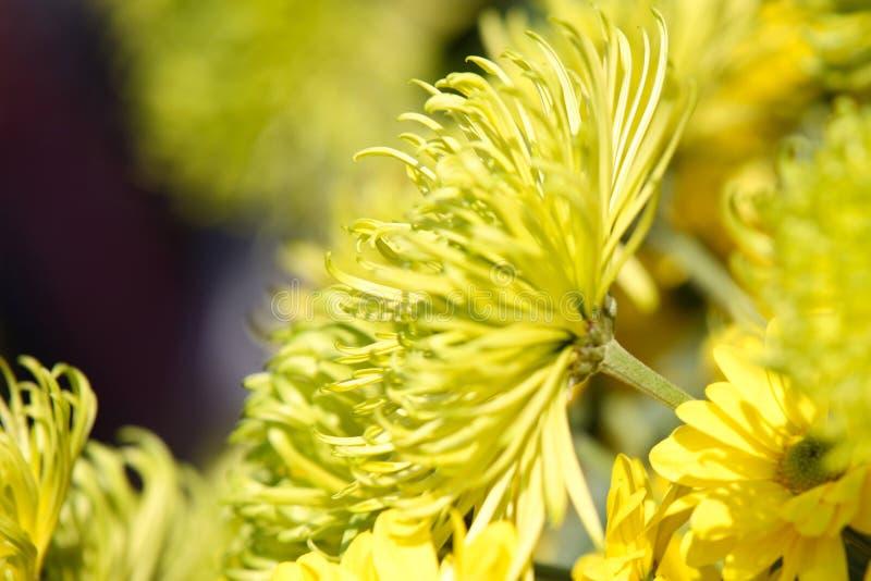 Vari fiori gialli luminosi in composizione, Tailandia immagine stock libera da diritti