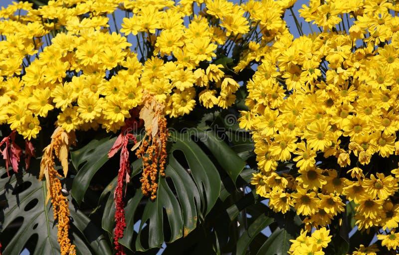 Vari fiori gialli luminosi in composizione, Tailandia fotografia stock