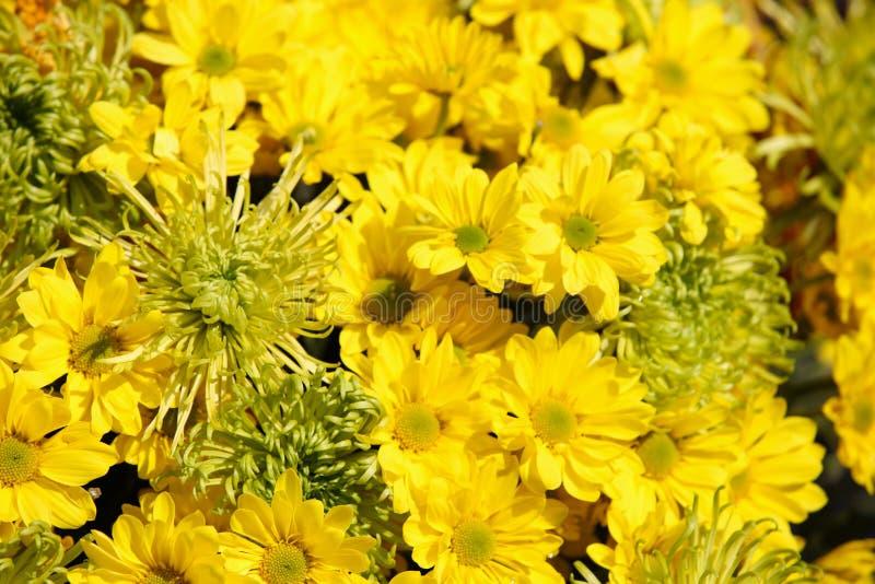 Vari fiori gialli luminosi in composizione, Tailandia immagini stock