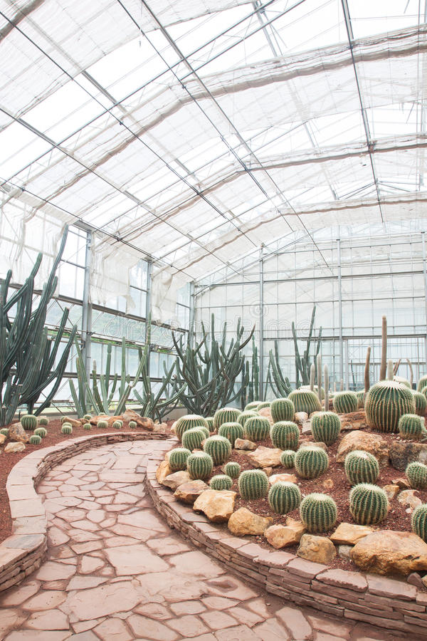 Vari tipi di cactus e di succulenti nella serra fotografia stock