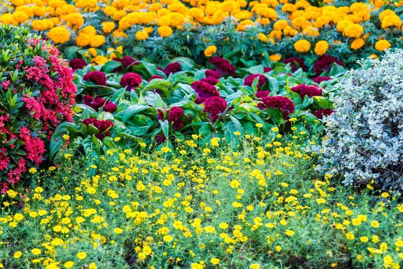 Vari tipi di fiori fotografia stock immagine di naughty for Tipi di fiori