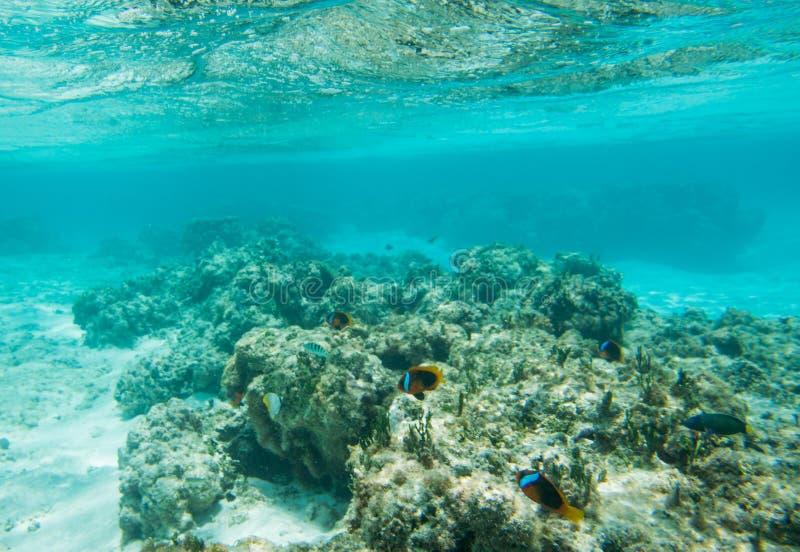 Variação da vida marinha no recife da praia de Yejele imagens de stock royalty free