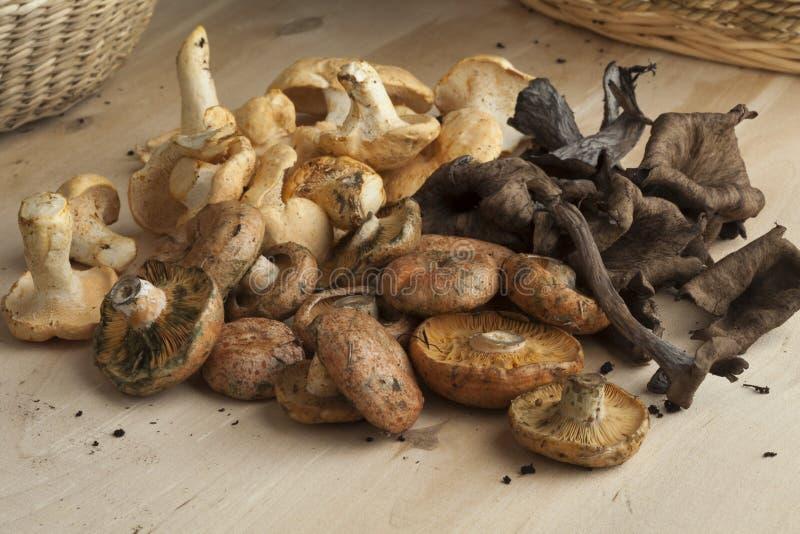 Variação de cogumelos selvagens frescos imagens de stock