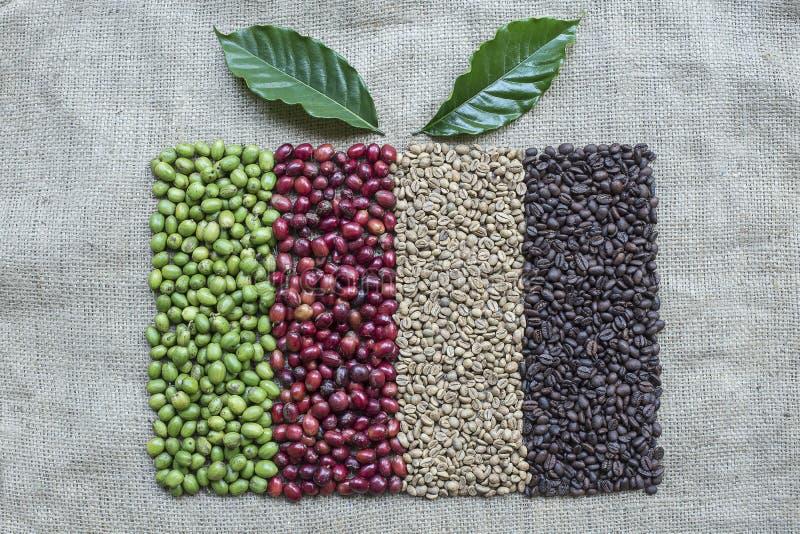 Variação dos feijões de café e das bagas de café fotos de stock