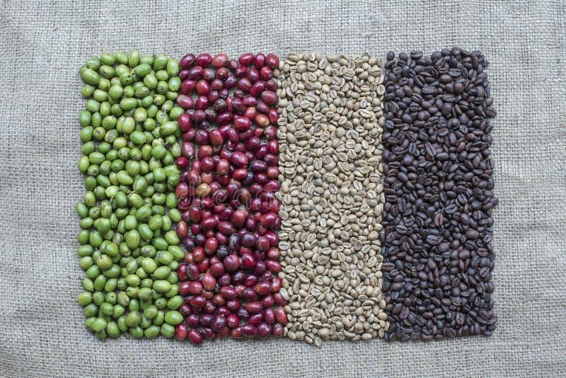 Variação dos feijões de café e das bagas de café imagens de stock royalty free
