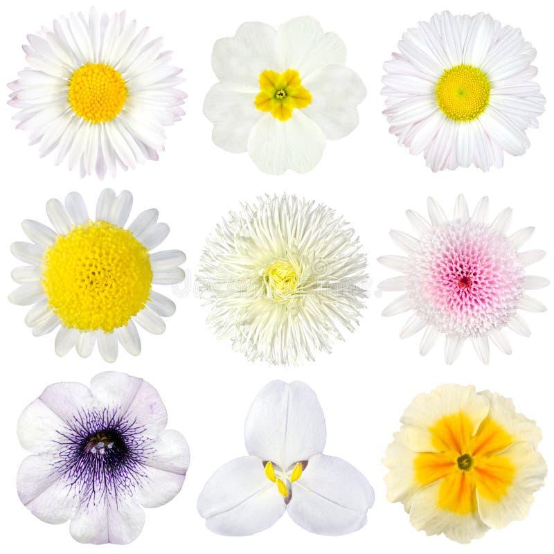 Varia accumulazione dei fiori bianchi isolati fotografie stock