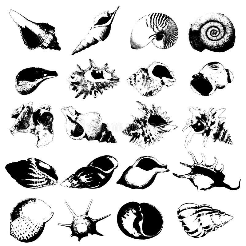 Varia clase de seashells libre illustration