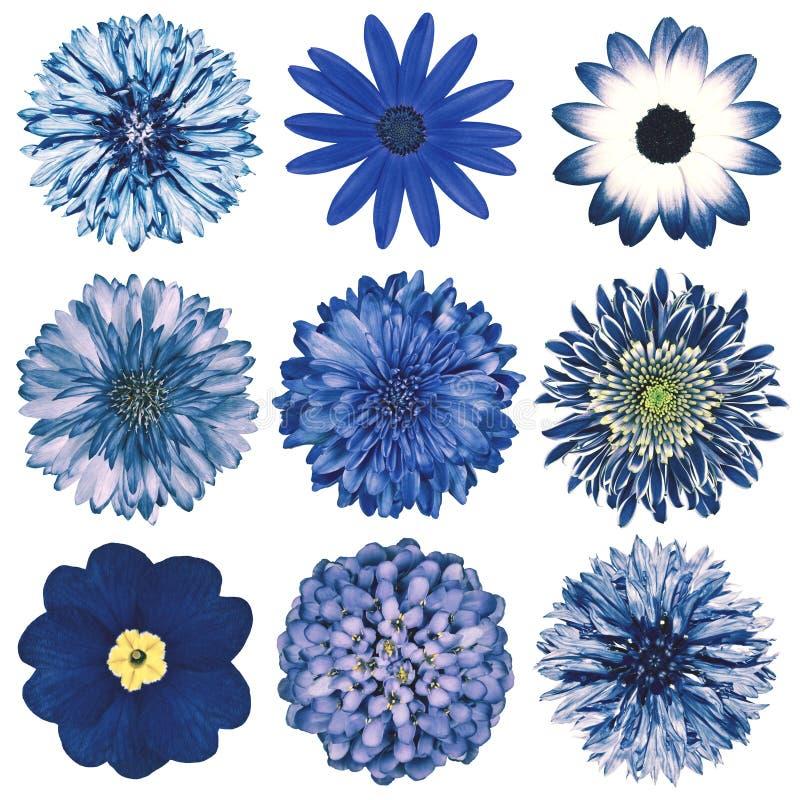Varia retro selezione d'annata dei fiori isolata su bianco fotografia stock libera da diritti