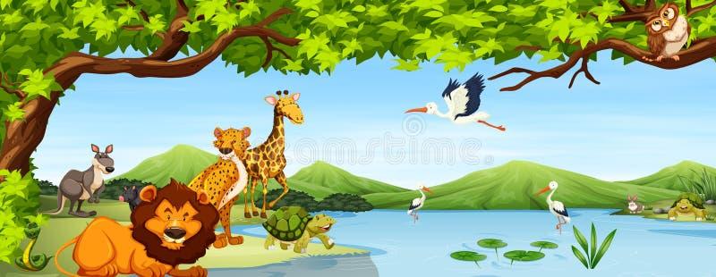 Varia scena degli animali selvatici illustrazione vettoriale
