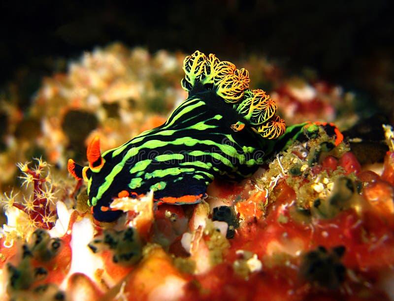 Variable Neon Slug royalty free stock images