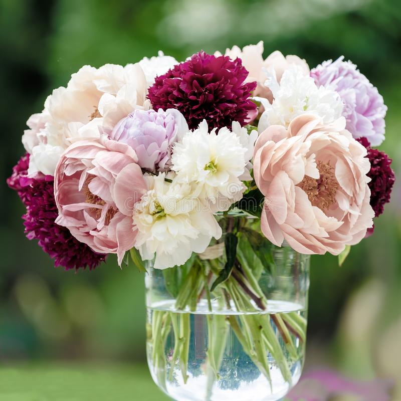 Peonies in vase, different kind of peonies in variant colors with blurred background. stock photos