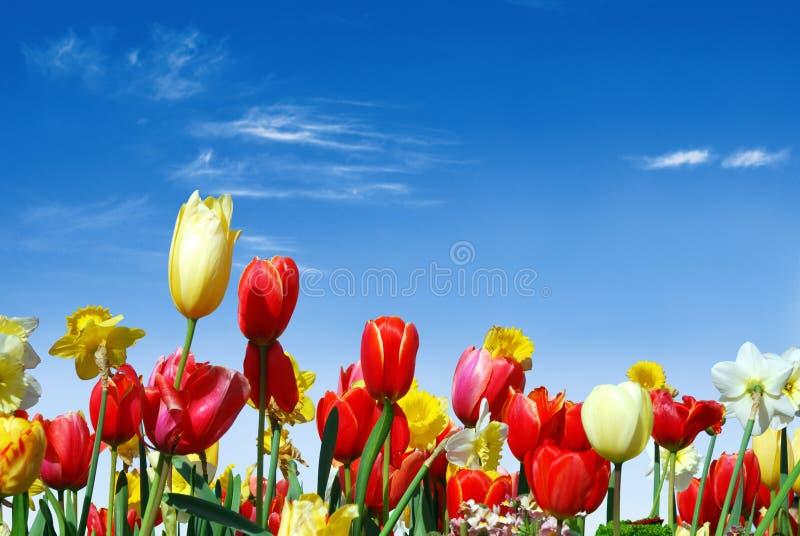 Varias flores del resorte hacia el cielo azul fotografía de archivo