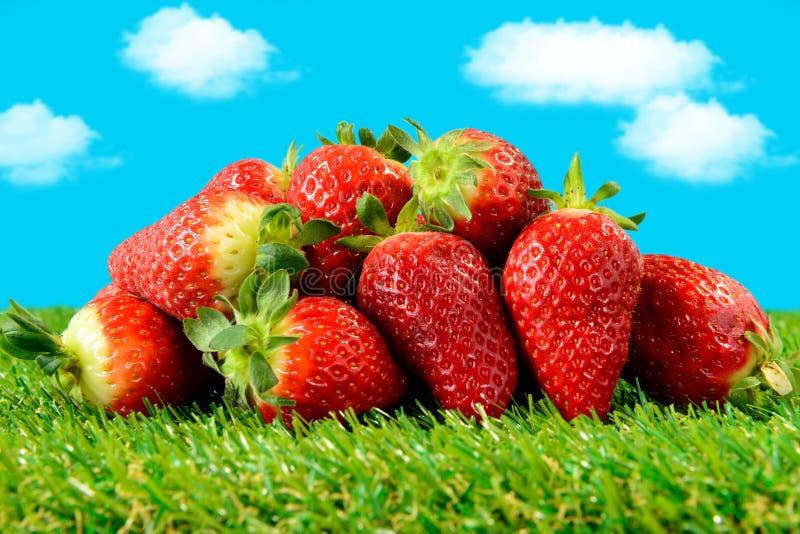 Varias fresas en hierba verde imagen de archivo libre de regalías