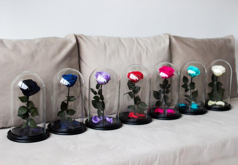 Varias rosas en un frasco Duradero subió preservado fotos de archivo libres de regalías