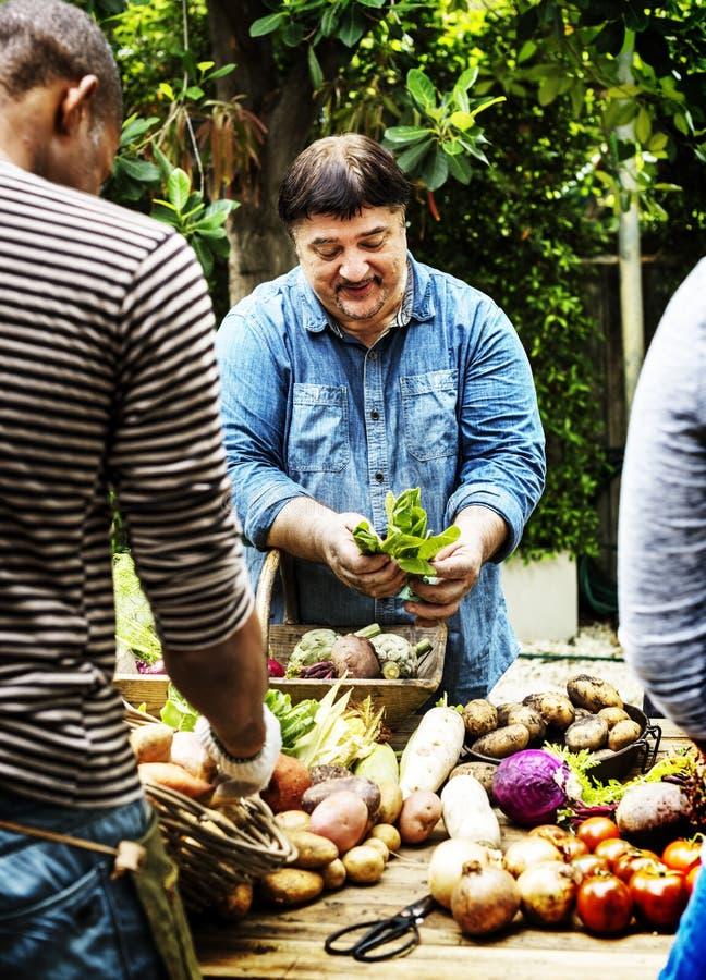 Variatie van verse organische groente op houten lijst stock fotografie