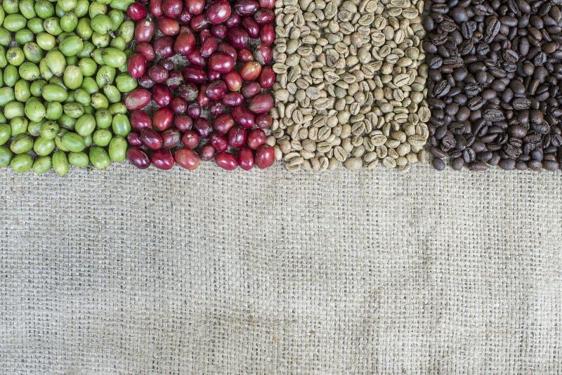 Variatievorm van Koffiebessen royalty-vrije stock fotografie