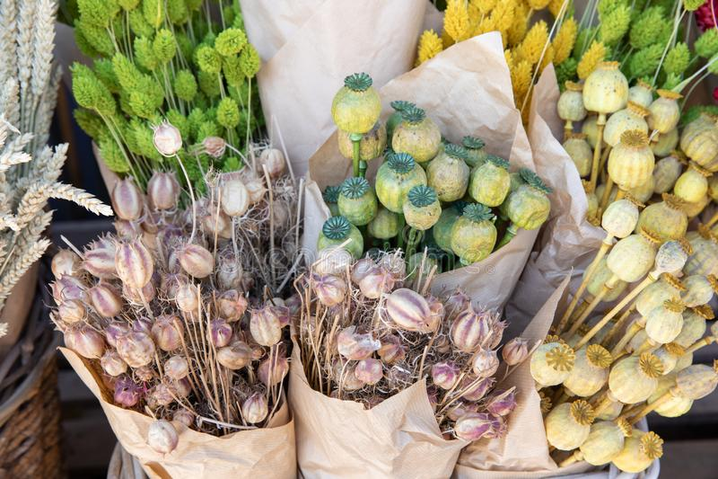 Variation av den naturliga växten torkade buketter för blomma för hem- garnering för blommor eviga av vallmohuvud, blom- mångfärg fotografering för bildbyråer