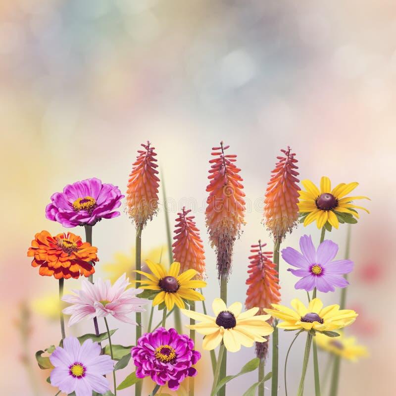 Variation av färgrika blommor fotografering för bildbyråer