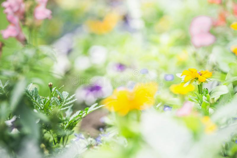 Variation av färgrika blommor på blomsterrabatten i en parkera, suddig bakgrund royaltyfri foto