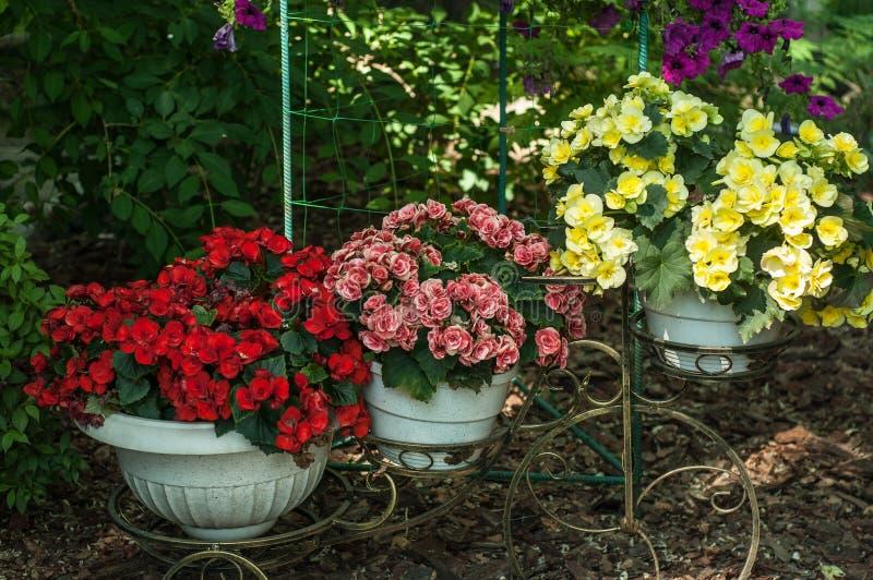 Variation av färgrika vårblommor i krukor arkivfoto