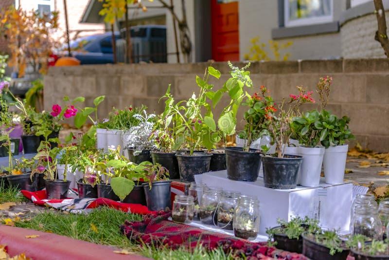 Variation av frodiga inlagda växter och blommor på trädgården av ett hem royaltyfria foton
