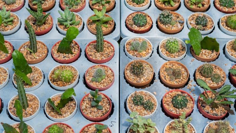Variation av kaktuns i magasinet arkivfoto