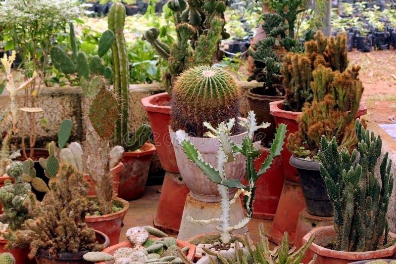 Variation av kaktuns och ökenväxter royaltyfri foto