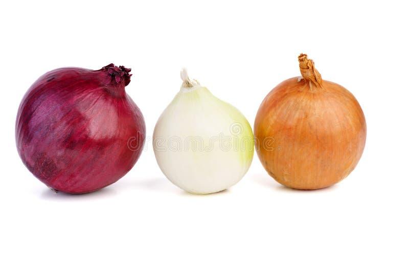 Variation av lökar som är purpurfärgade som är vita och som är bruna royaltyfria foton