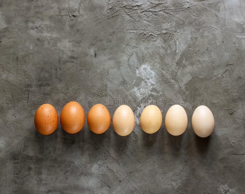 Variation av mångfärgade fega ägg fotografering för bildbyråer