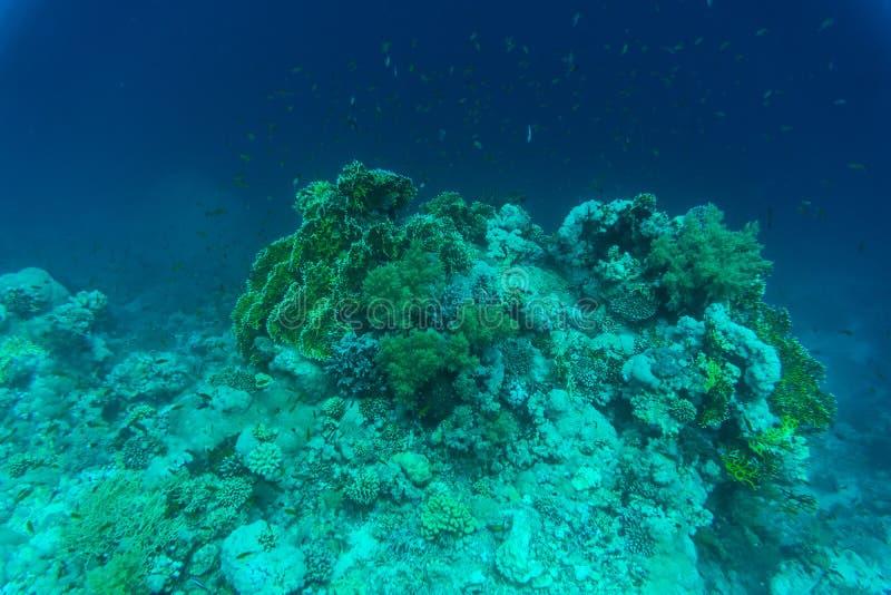 Variation av mjuk och hård korall formar, svampar och filialer i det djupblå havet Gulna, klämma fast, göra grön, lilor och bryna royaltyfria bilder