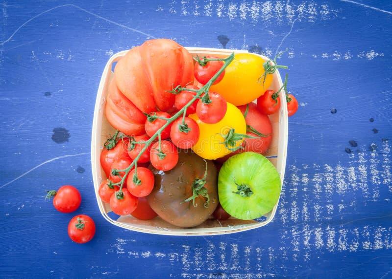 Variation av nya tomater royaltyfri fotografi