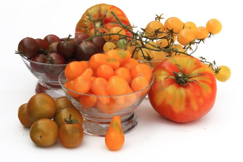 Variation av nya tomater som är fullvuxna i organiska fruktträdgårdar arkivfoto