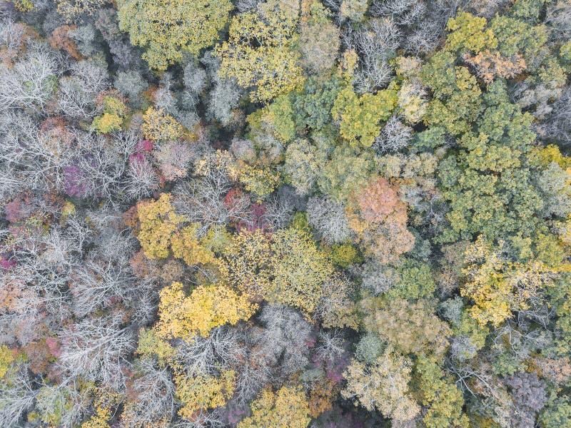Variation av sikten för surr för höstskogfärger den flyg- Jorddag, en arkivbilder