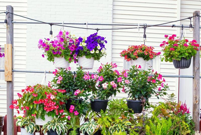 Variation av växter på en lokal barnkammare royaltyfria bilder