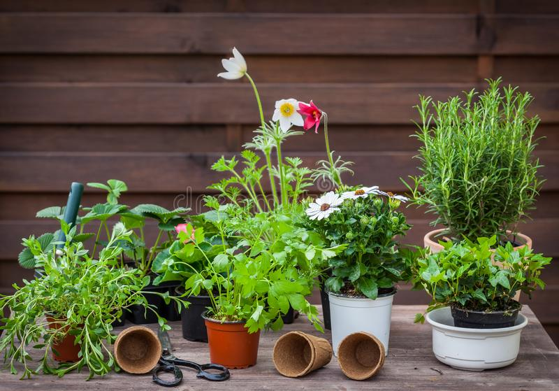 Variation of plants and flower pots with gardening tools. For planting royalty free stock photography