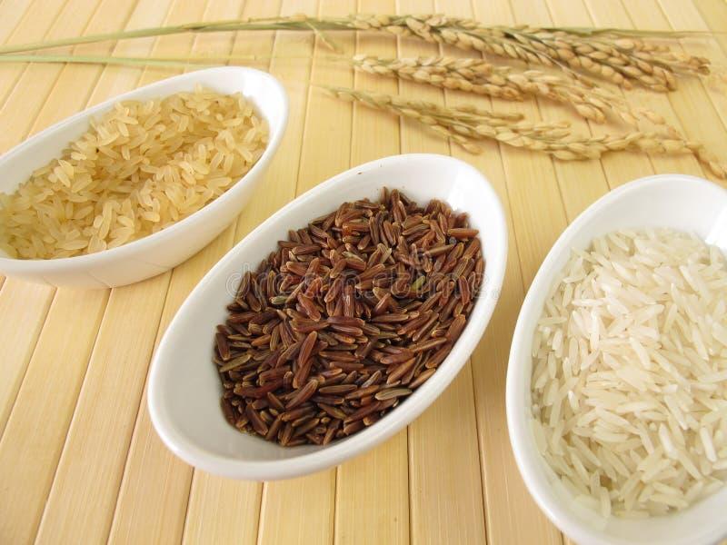 Variationer av rice royaltyfri bild