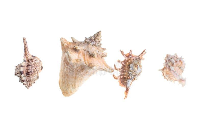 Variationer av snäckskal royaltyfria bilder