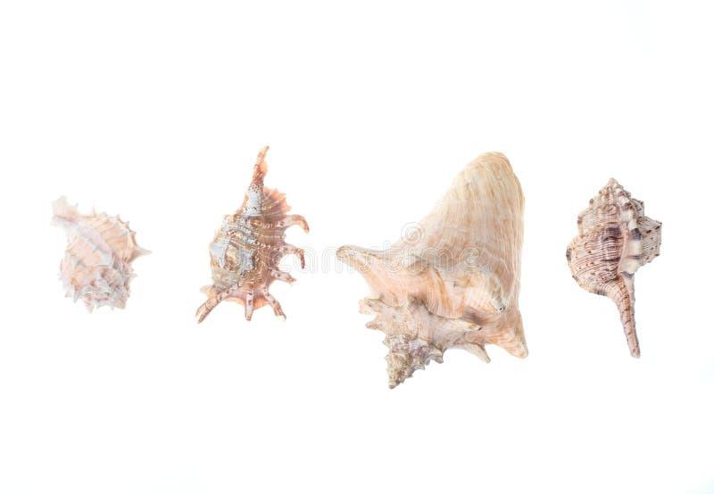 Variationer av snäckskal arkivbild