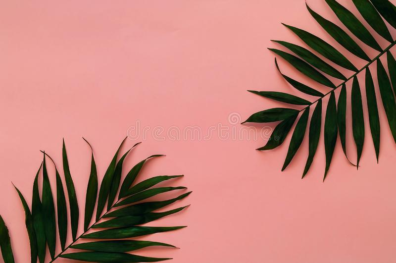 Variations of tropical palm leaves on light texture. Creative tropical leaves on pink background, copy space, closeup. royalty free stock images