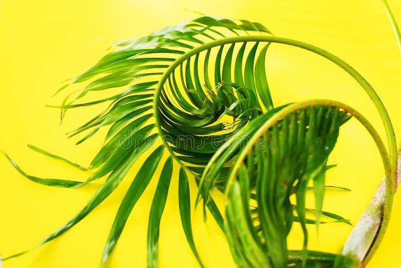 Variations Tropical Palm Leaves Yellow Flat Lay royalty free stock image