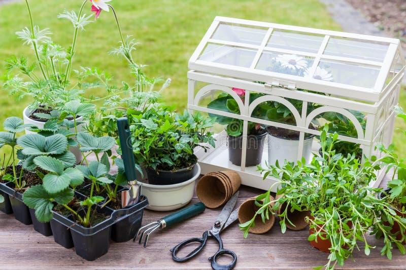 Variazione delle piante e dei vasi da fiori con gli strumenti di giardinaggio fotografia stock