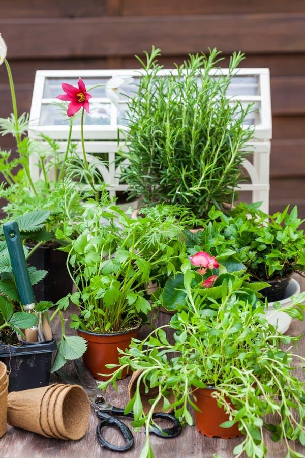 Variazione delle piante e dei vasi da fiori con gli strumenti di giardinaggio fotografie stock