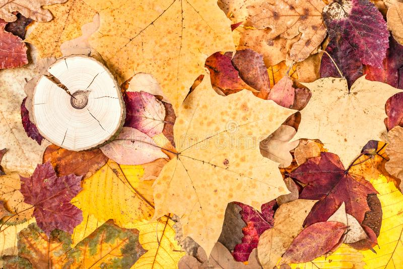 varicoloured fallen autumn leaves and sawed wood stock images