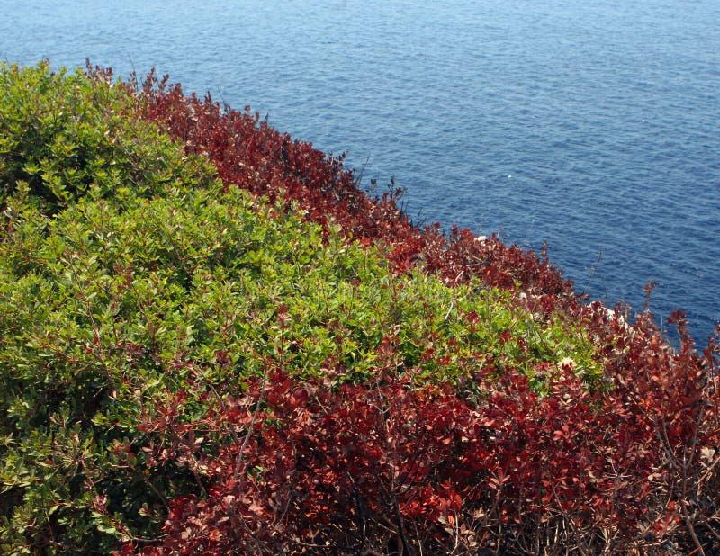 A varicoloured shrubbery rug. stock photo