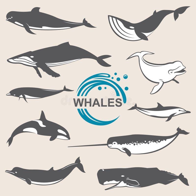 Varie balene messe illustrazione vettoriale