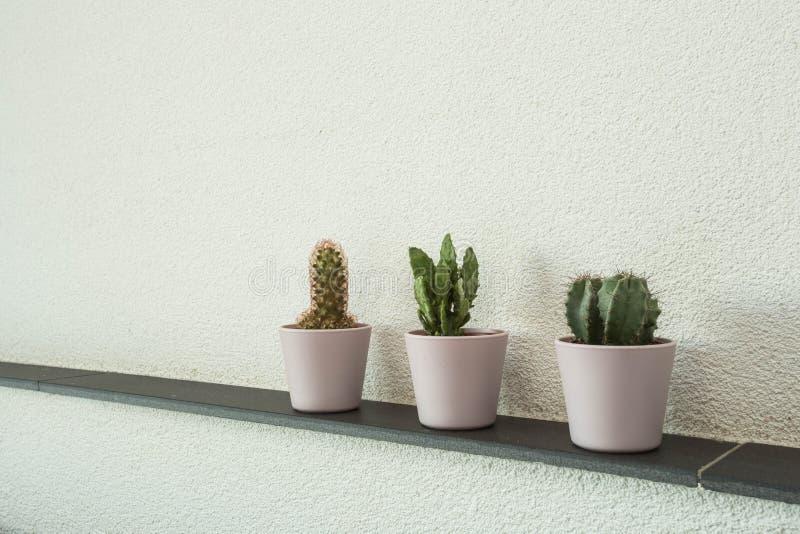 Varie piante del cactus in vaso sulla parete del cemento, fondo bianco della parete immagine stock libera da diritti