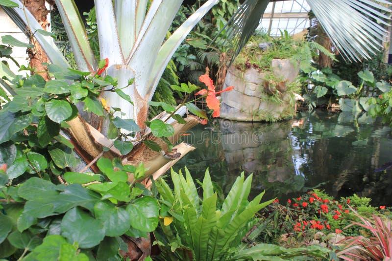Varie piante nella serra di Parc Phoenix in Nizza immagini stock