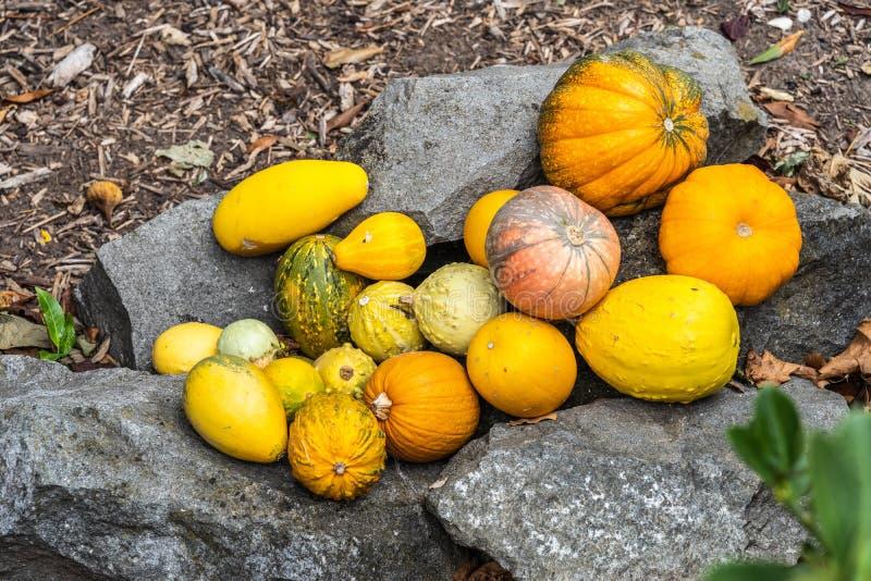 Varie zucche come decorazione su una pietra fotografia stock