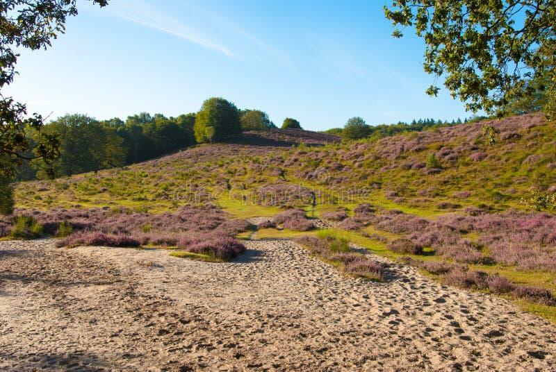 Varied Landscape Royalty Free Stock Images